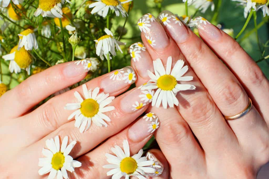 Beautiful nail design. Woman hands with chamomile flowers
