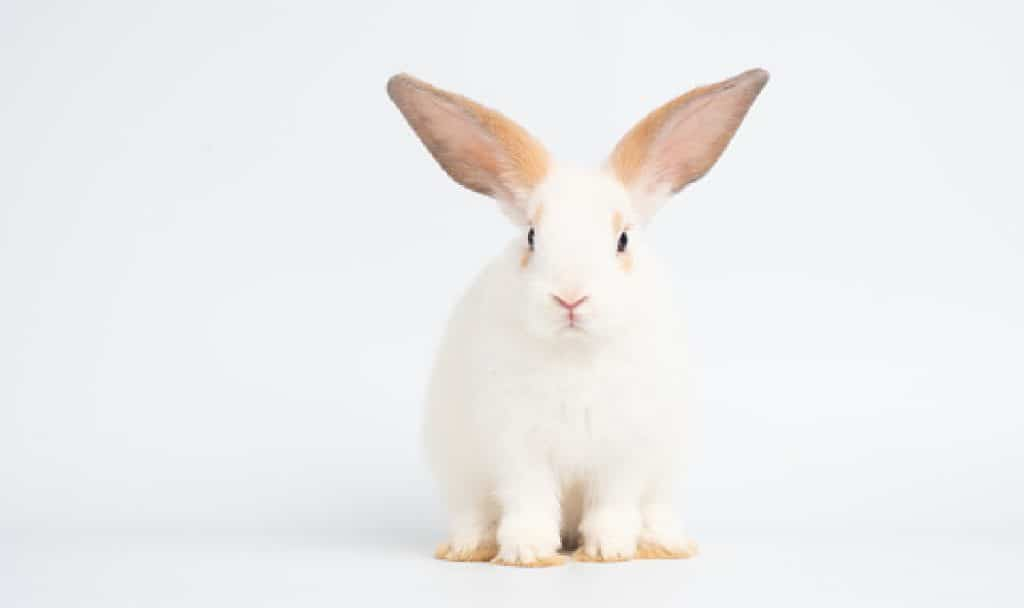 Adorable baby white rabbit sitting on white background