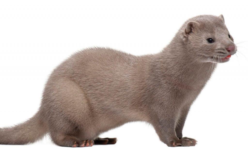 mink fur is not cruelty free