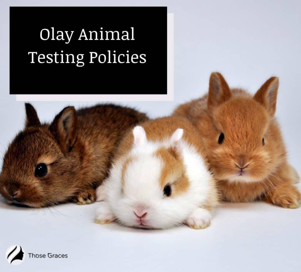 Olay animal testing policies